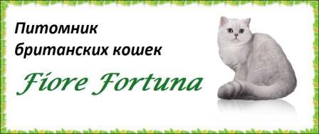 Питомник британских кошек Fiore Fortuna